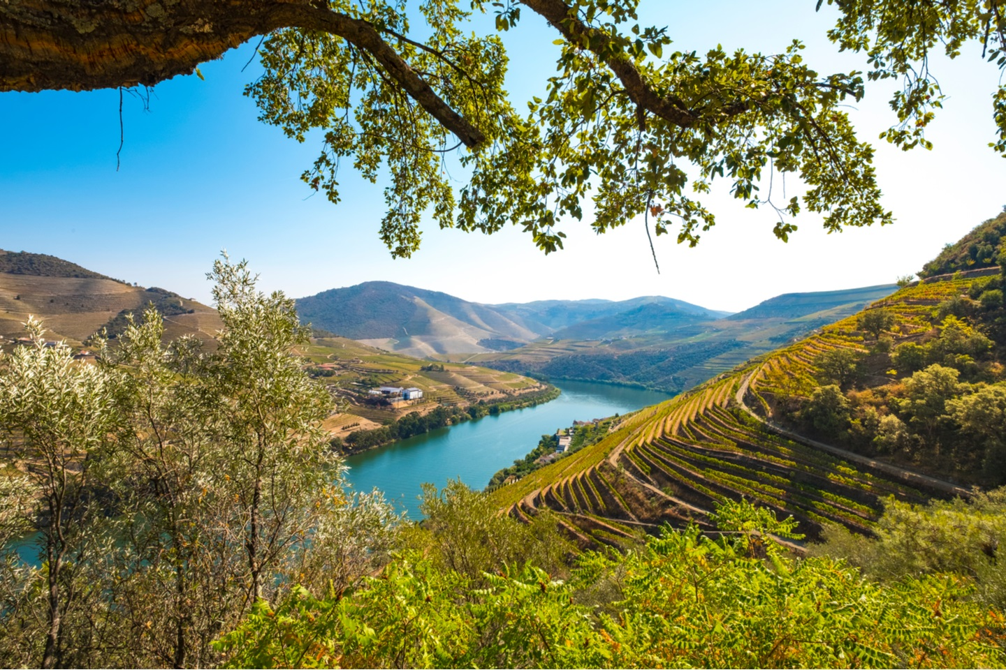 The Magnificent Douro Valley Shutterstock 1028509903